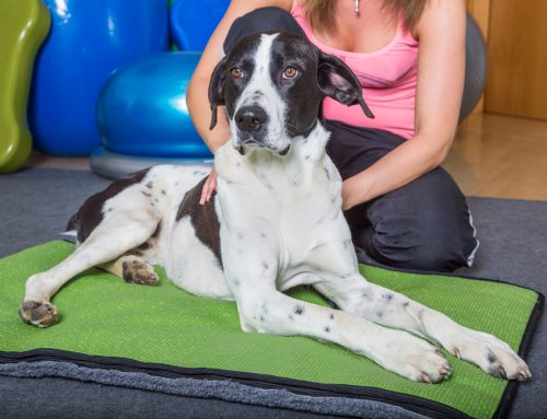 5 Things to Know About Veterinary Chiropractic Care