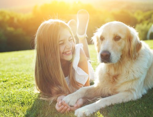 Do's and Don'ts of Interactions Between Kids and Pets