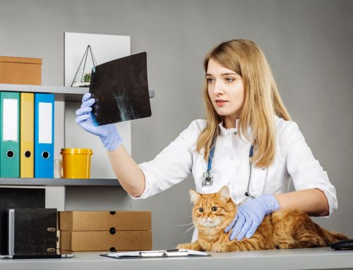 Managing Arthritis in Cats and Dogs