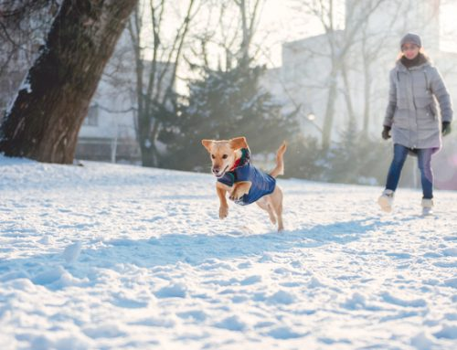 Snow and Sun: How to Stay Active with Your Pet Year-Round