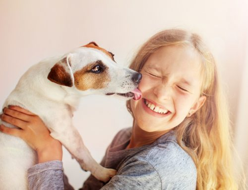 7 Tips to Keep Your Kids Safe Around Pets