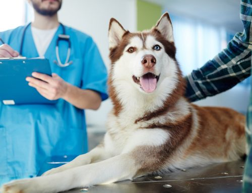 5 At-Home Steps to Reducing Your Pet's Stress During Veterinary Visits
